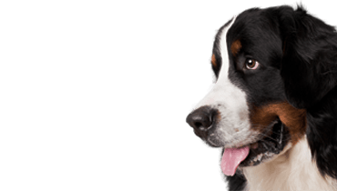 Dog Daycare Eaton Rapids, MI