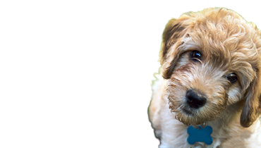 Dog Boarding Dansville, MI | Dog Training Dansville, MI ...