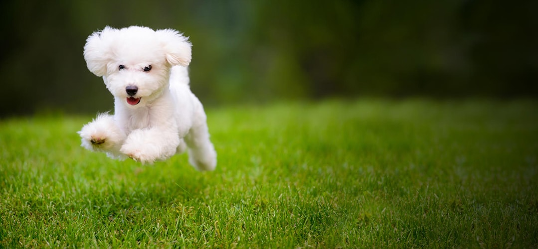 Dog Boarding Mason, MI | Dog Training Mason, MI | Dog Gone Fun